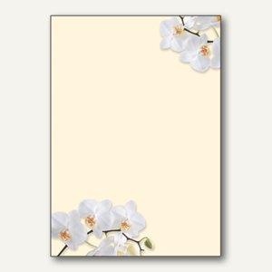 Motiv-Papier White Orchid